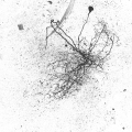 icon_data